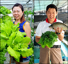 AQUAPONIC VEGETABLES - NIPPON KOI FARM PTE LTD